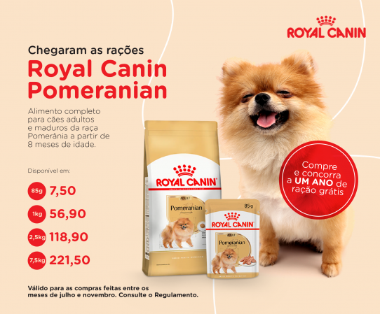 Royal Pomeranian